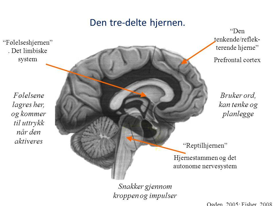 Den tre-delte hjernen. Den tenkende/reflek- terende hjerne Prefrontal cortex. Følelseshjernen . Det limbiske system.