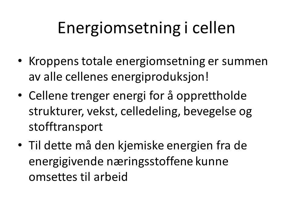 Energiomsetning i cellen