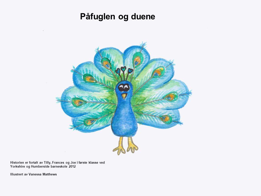 Påfuglen og duene Historien er fortalt av Tilly, Frances og Joe i første klasse ved. Yorkshire og Humberside barneskole 2012.