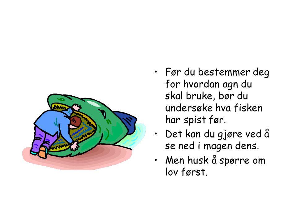 Før du bestemmer deg for hvordan agn du skal bruke, bør du undersøke hva fisken har spist før.