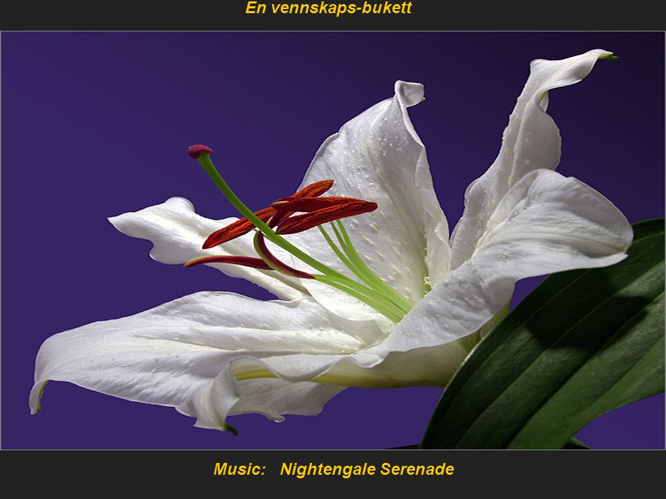 Music: Nightengale Serenade