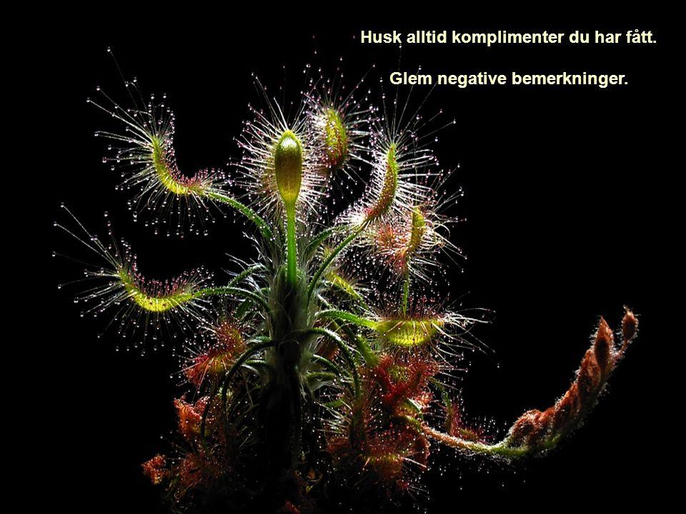 Husk alltid komplimenter du har fått. Glem negative bemerkninger.