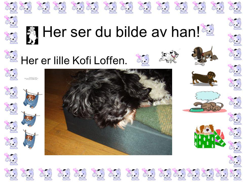 Her ser du bilde av han! Her er lille Kofi Loffen.