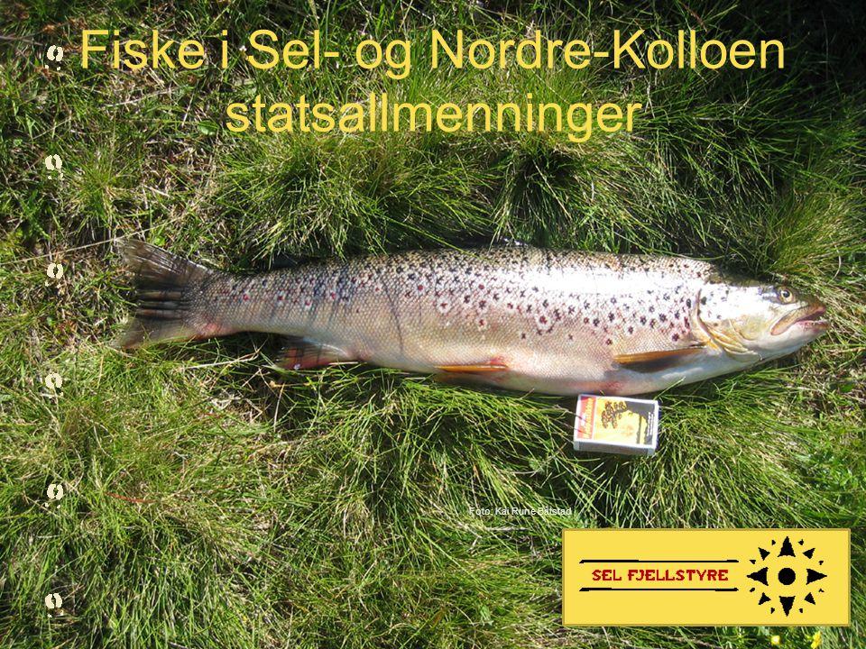 Fiske i Sel- og Nordre-Kolloen statsallmenninger
