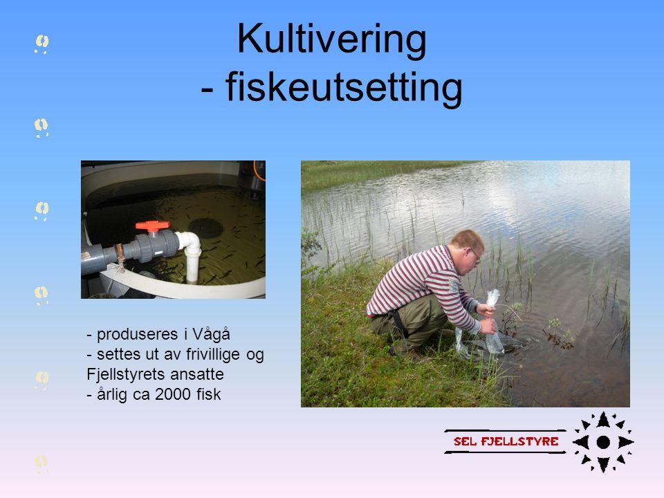 Kultivering - fiskeutsetting
