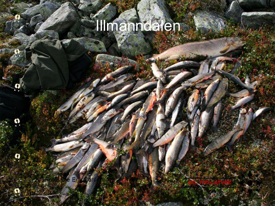Illmanndalen Foto: Ole Erik Dahlen
