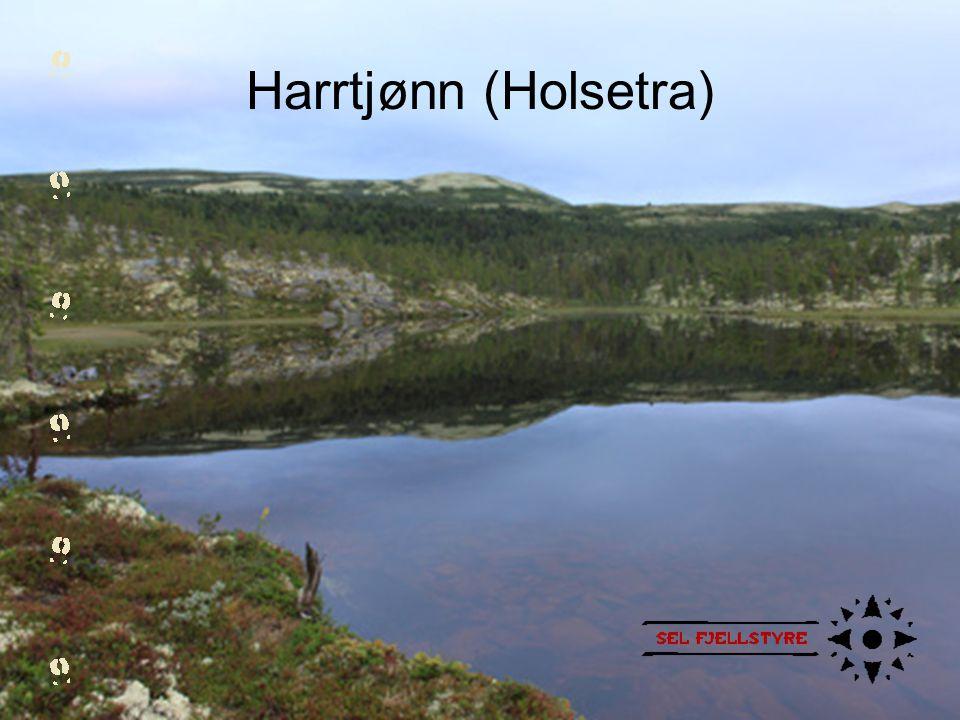 Harrtjønn (Holsetra)