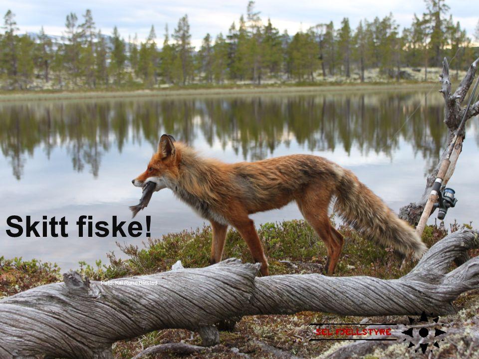 Skitt fiske! Foto: Kai Rune Båtstad Foto: Kai Rune Båtstad