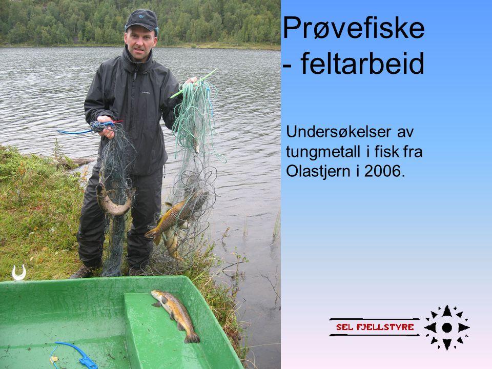Prøvefiske - feltarbeid