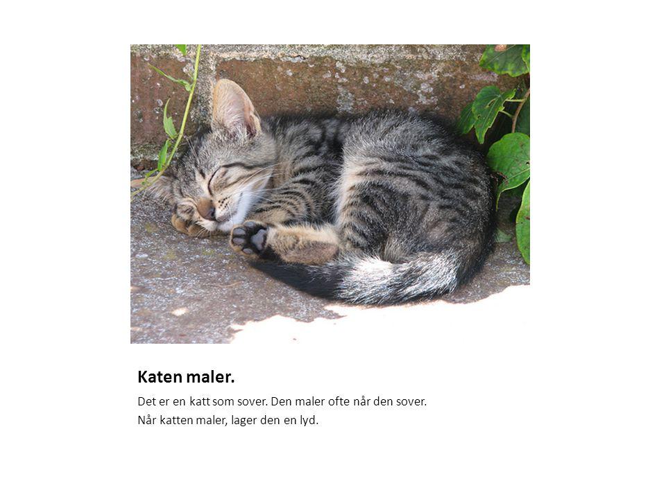 Katen maler. Det er en katt som sover. Den maler ofte når den sover.