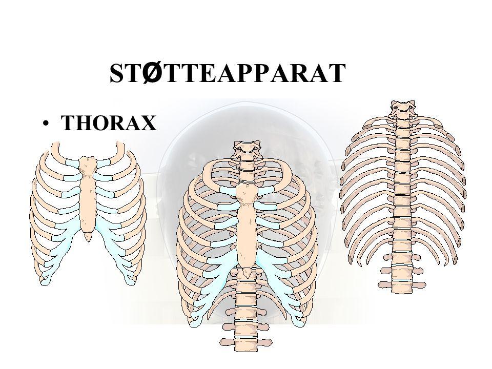STØTTEAPPARAT THORAX