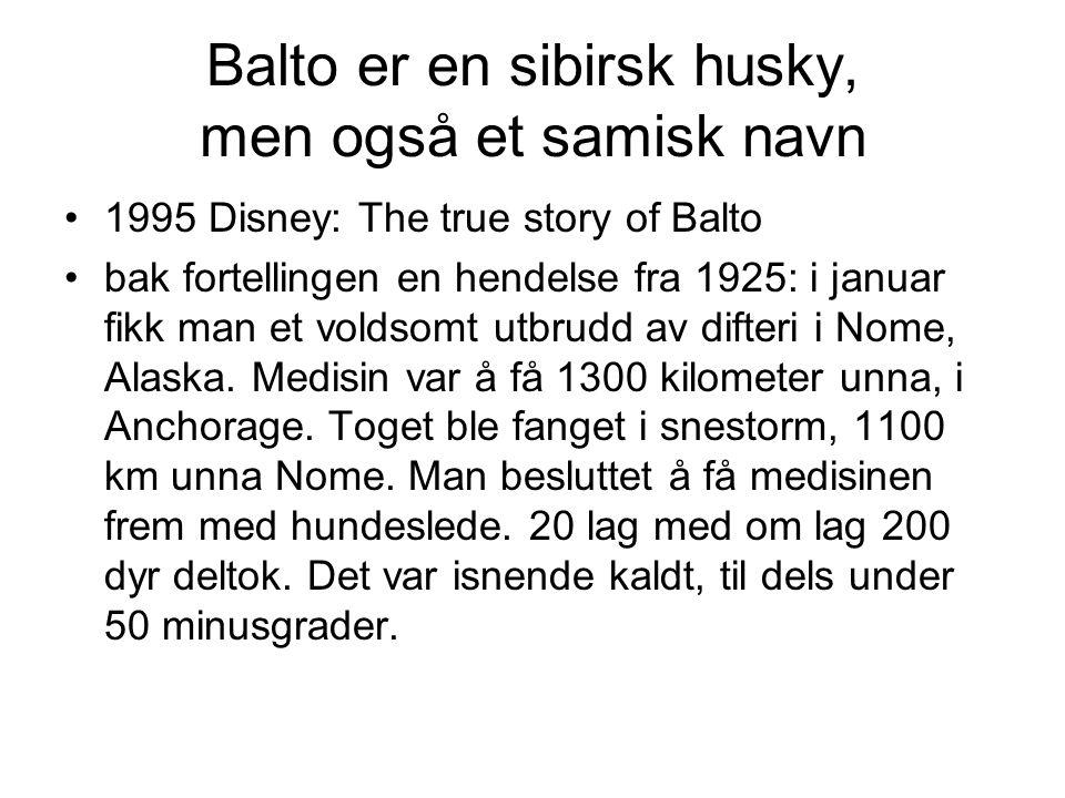 Balto er en sibirsk husky, men også et samisk navn