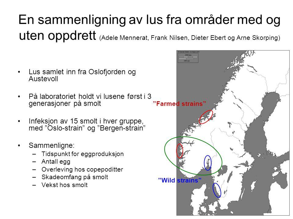 En sammenligning av lus fra områder med og uten oppdrett (Adele Mennerat, Frank Nilsen, Dieter Ebert og Arne Skorping)