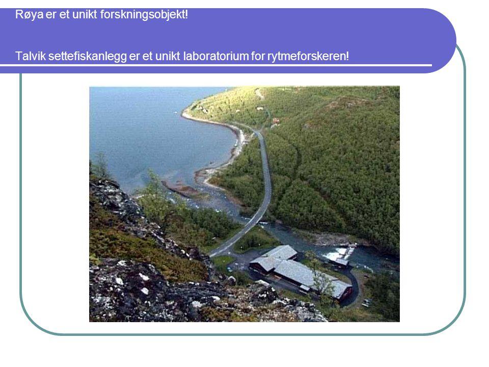 Røya er et unikt forskningsobjekt