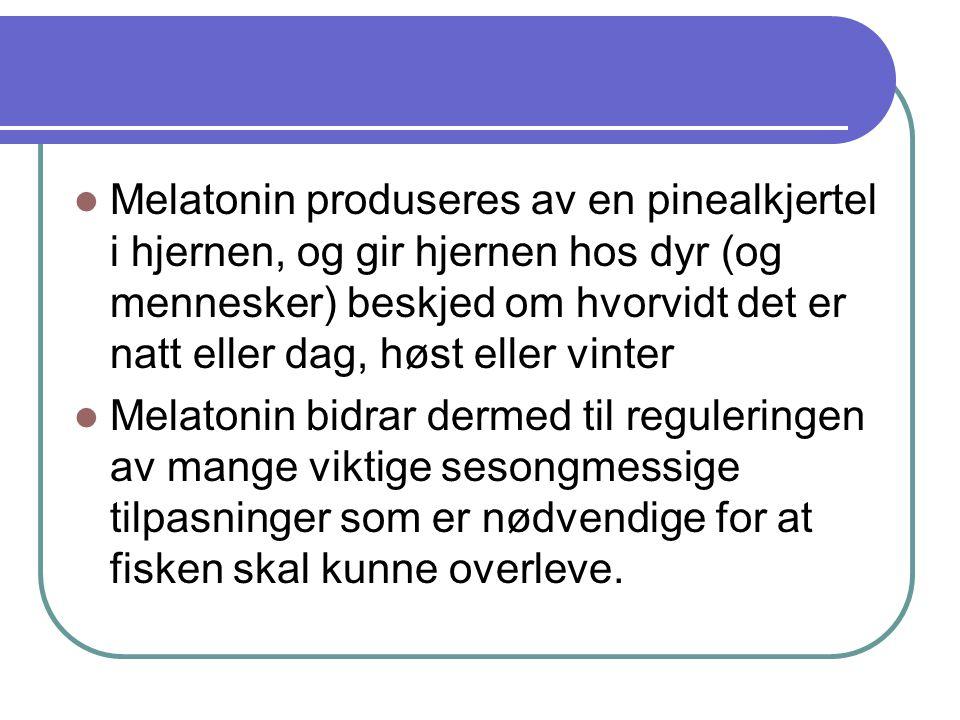 Melatonin produseres av en pinealkjertel i hjernen, og gir hjernen hos dyr (og mennesker) beskjed om hvorvidt det er natt eller dag, høst eller vinter