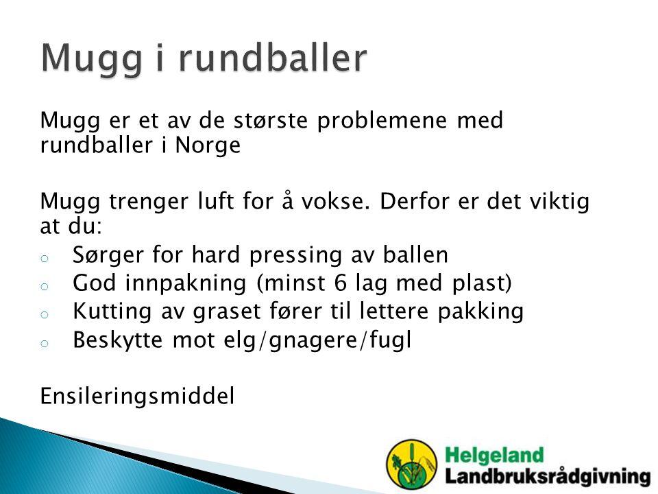Mugg i rundballer Mugg er et av de største problemene med rundballer i Norge. Mugg trenger luft for å vokse. Derfor er det viktig at du: