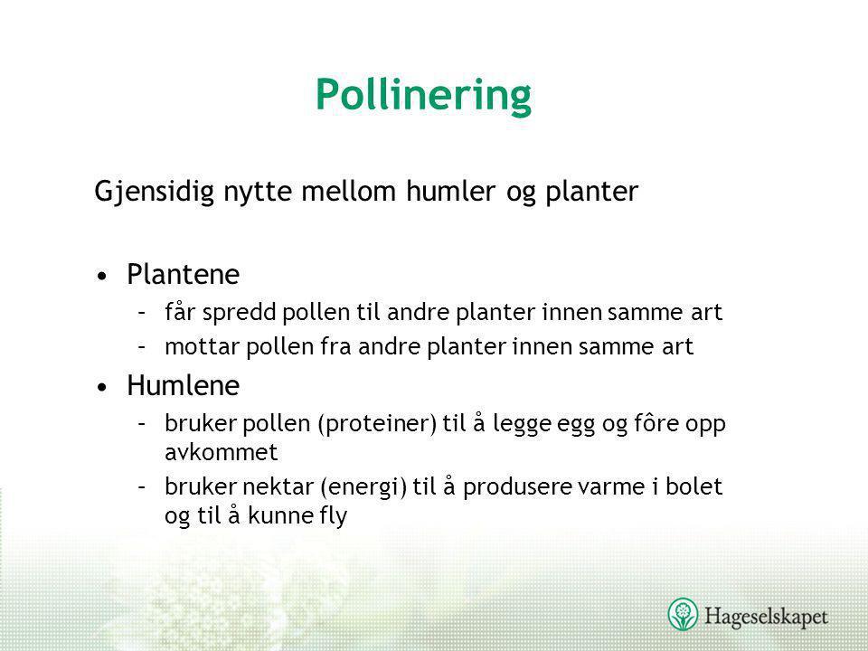 Pollinering Gjensidig nytte mellom humler og planter Plantene Humlene