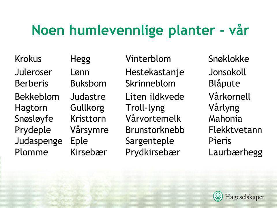 Noen humlevennlige planter - vår