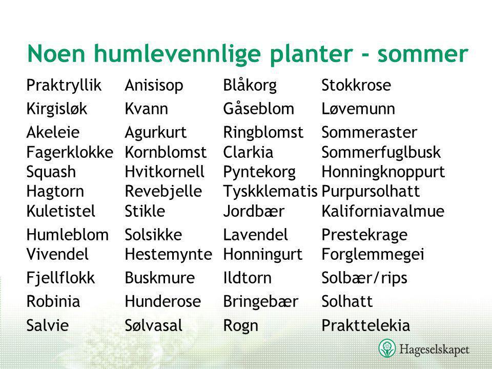 Noen humlevennlige planter - sommer