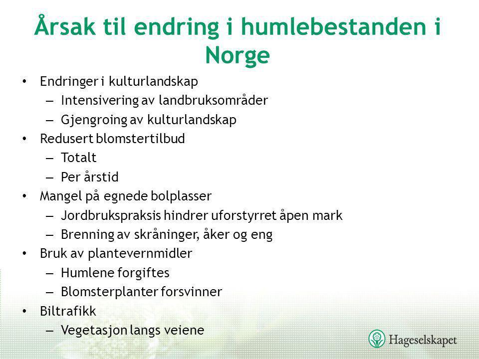 Årsak til endring i humlebestanden i Norge