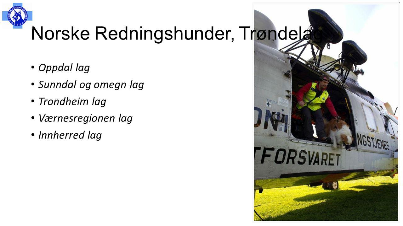 Norske Redningshunder, Trøndelag