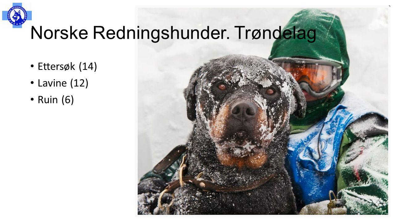 Norske Redningshunder. Trøndelag
