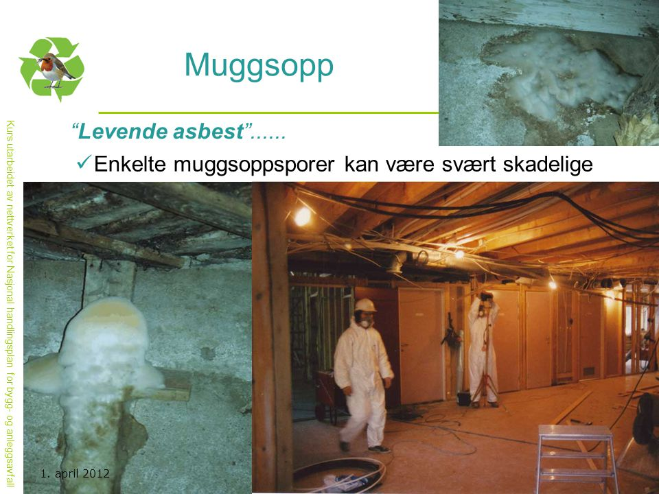 Muggsopp Levende asbest ......