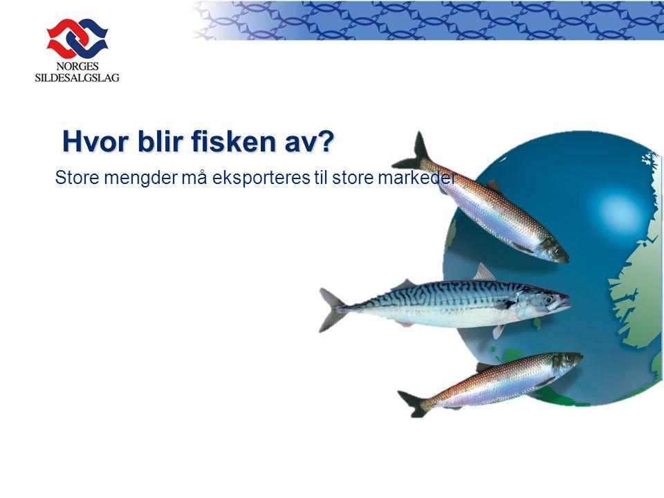 Hvor blir fisken av Store mengder må eksporteres til store markeder