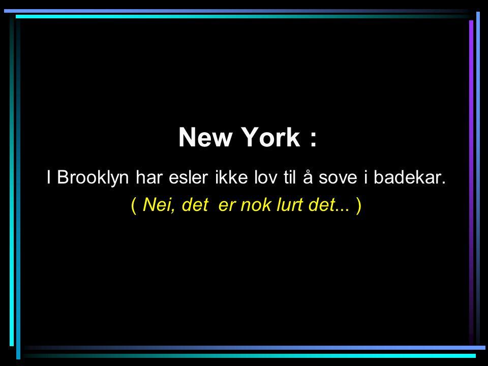 New York : I Brooklyn har esler ikke lov til å sove i badekar.