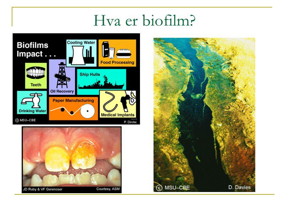 Hva er biofilm