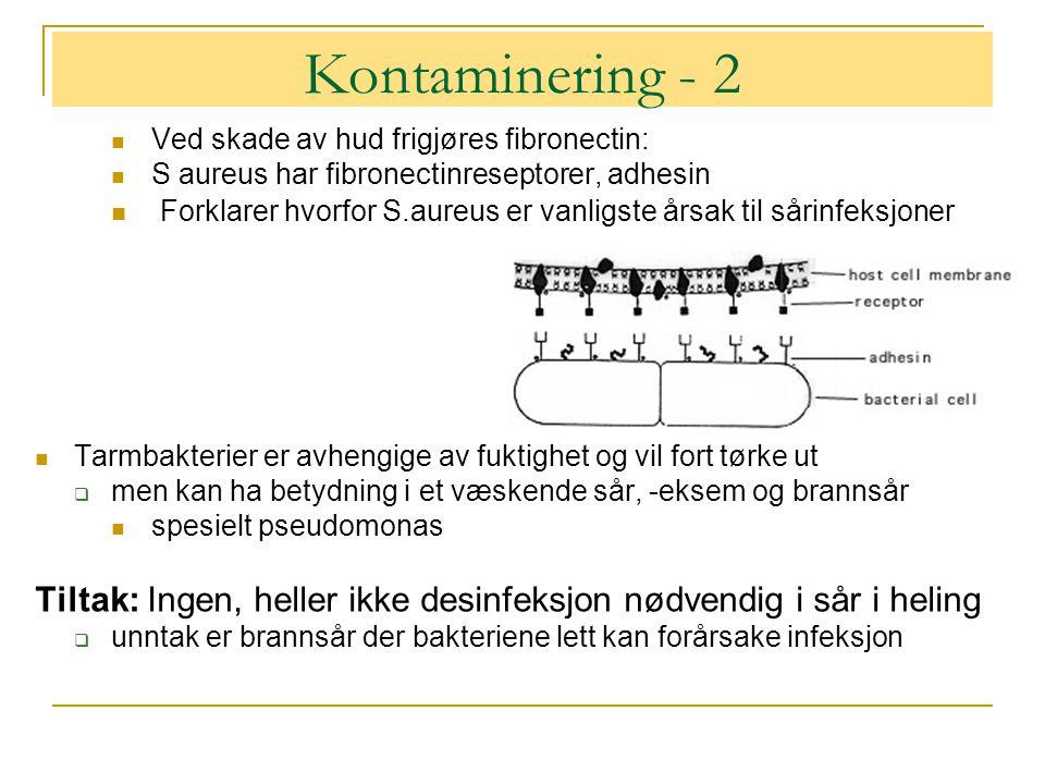 Kontaminering - 2 Ved skade av hud frigjøres fibronectin: S aureus har fibronectinreseptorer, adhesin.