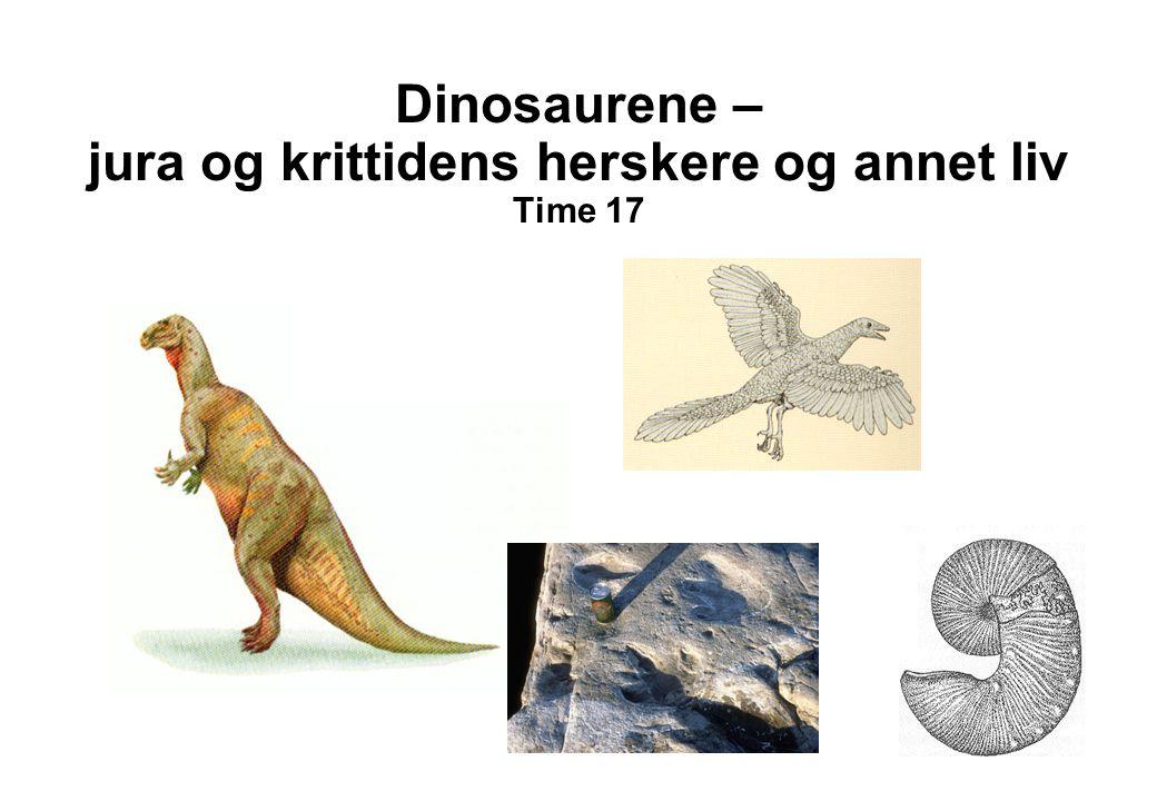 Dinosaurene – jura og krittidens herskere og annet liv Time 17