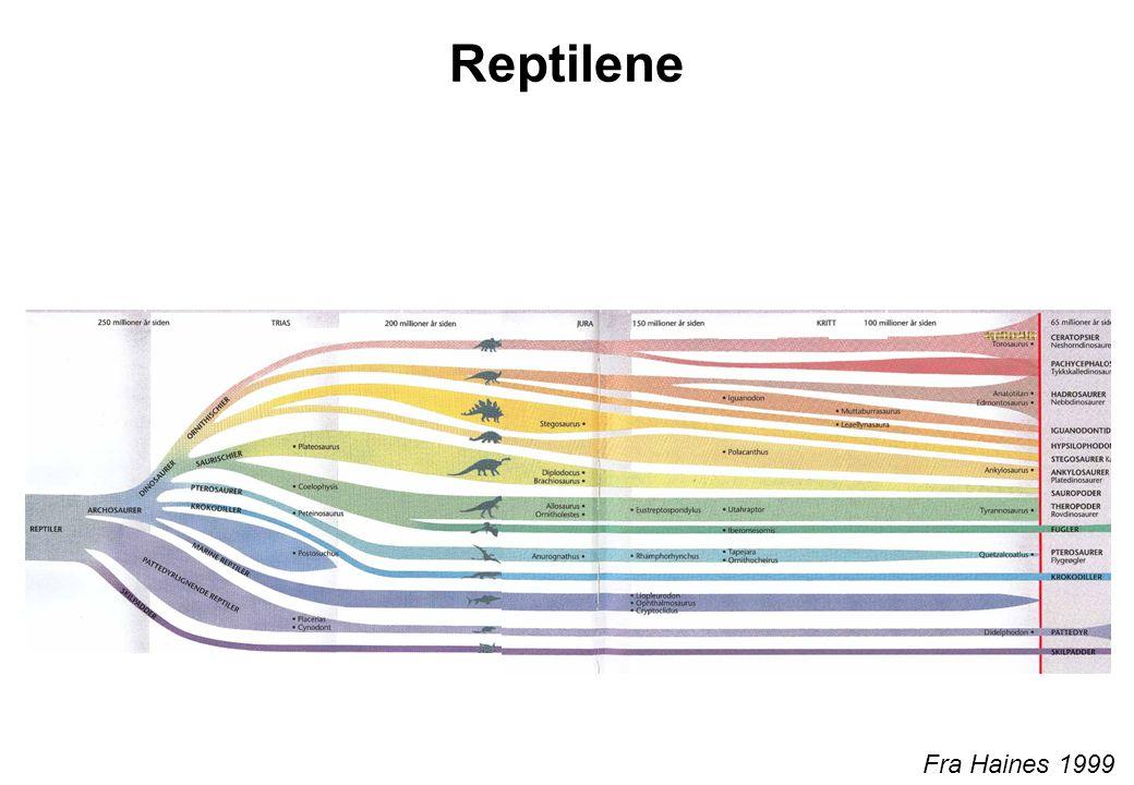 Reptilene Fra Haines 1999