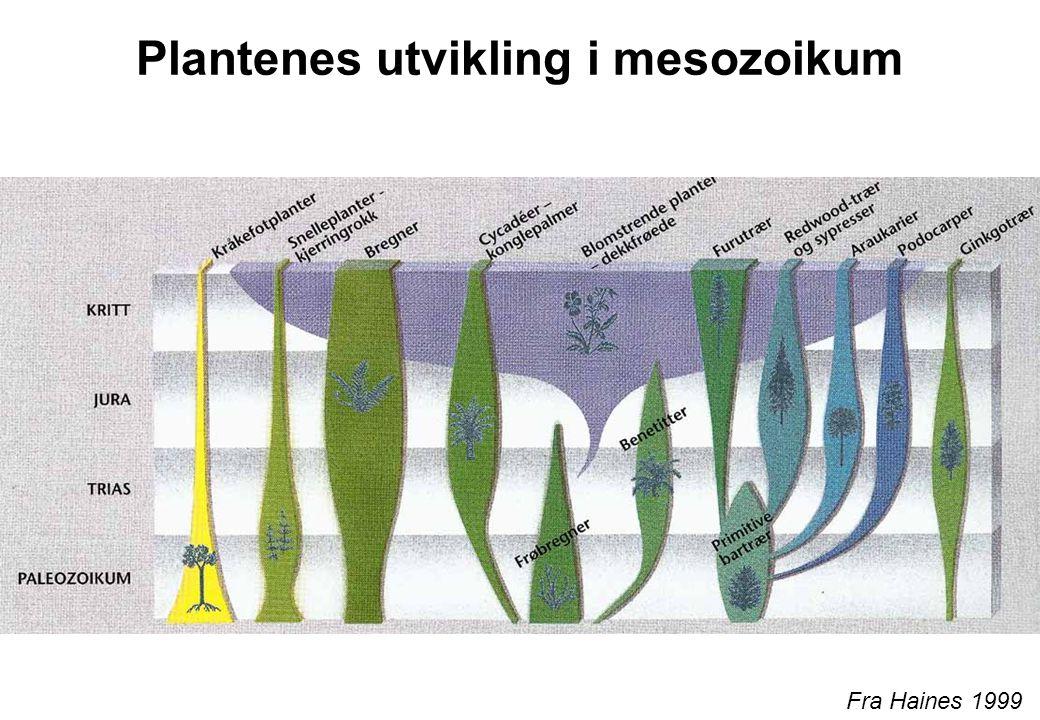 Plantenes utvikling i mesozoikum
