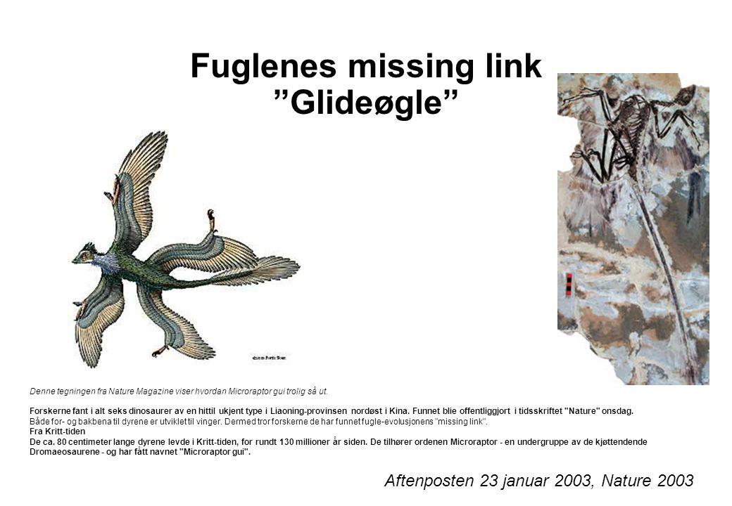 Fuglenes missing link Glideøgle