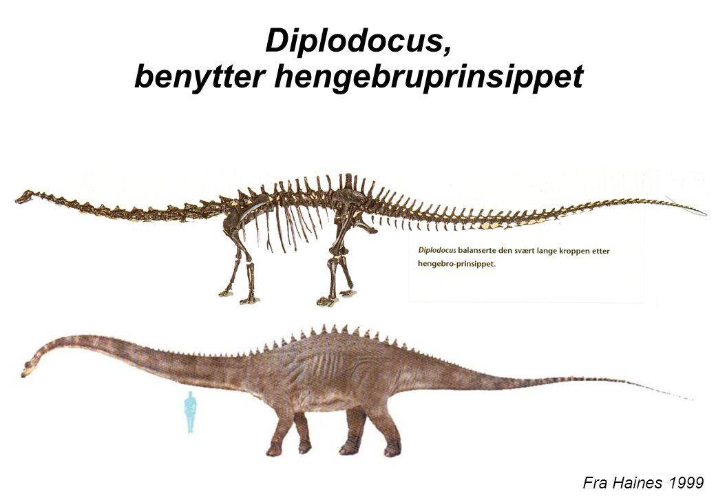 Diplodocus, benytter hengebruprinsippet