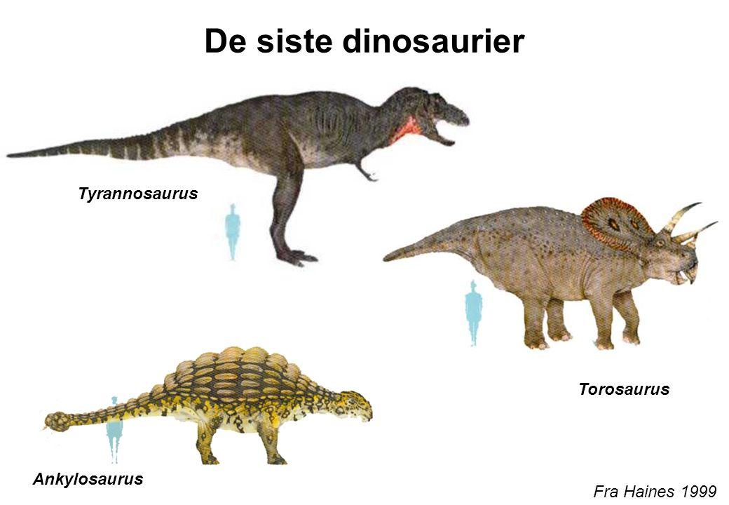 De siste dinosaurier Tyrannosaurus Torosaurus Ankylosaurus