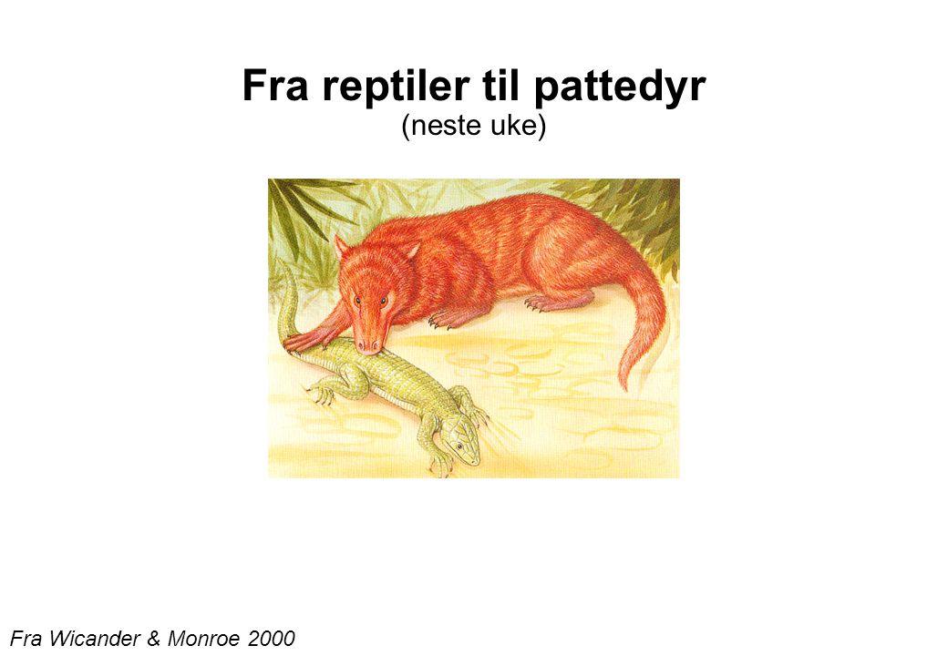 Fra reptiler til pattedyr (neste uke)