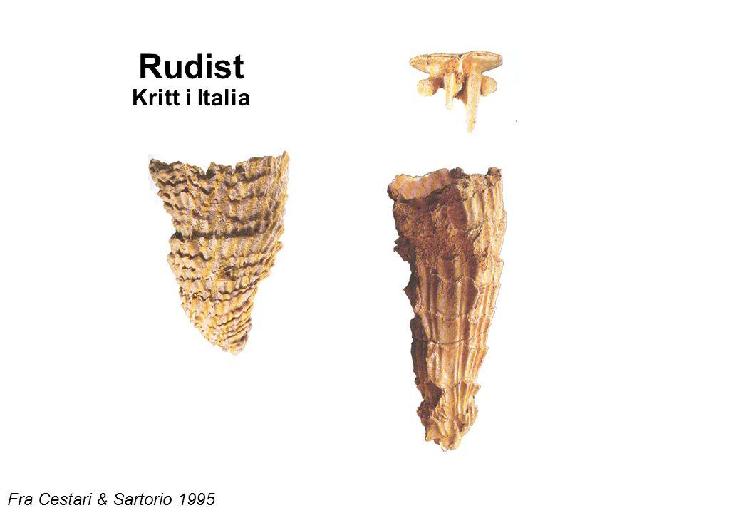 Rudist Kritt i Italia Fra Cestari & Sartorio 1995