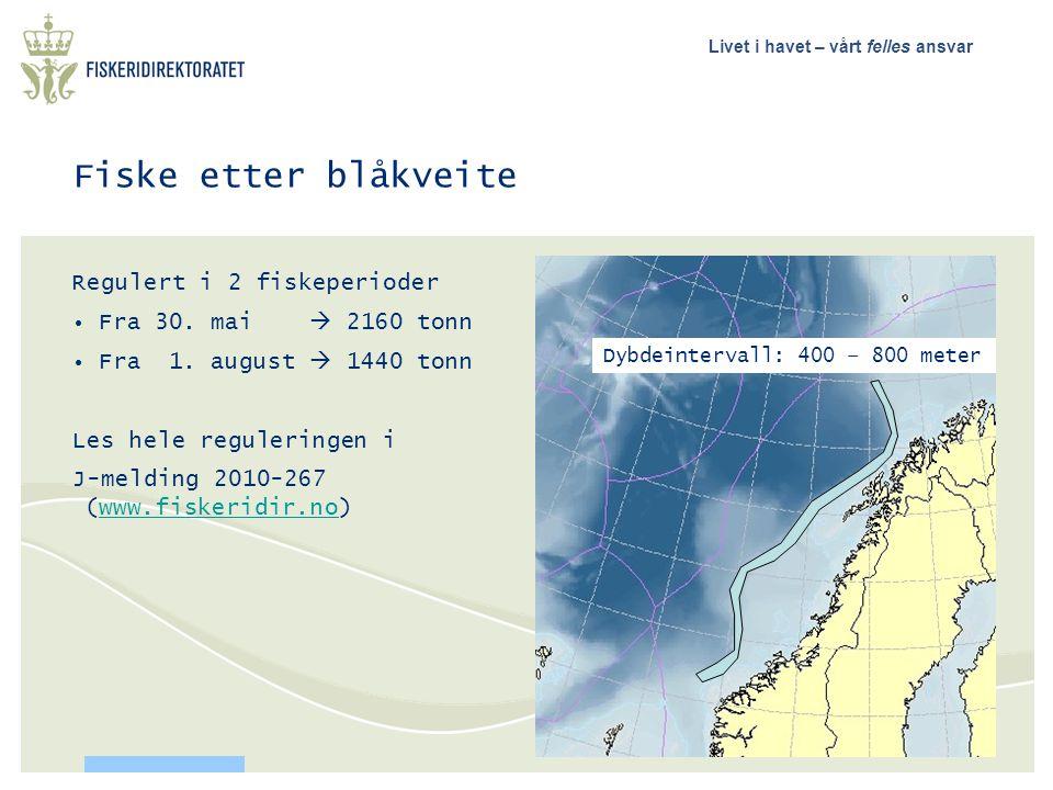 Fiske etter blåkveite Regulert i 2 fiskeperioder