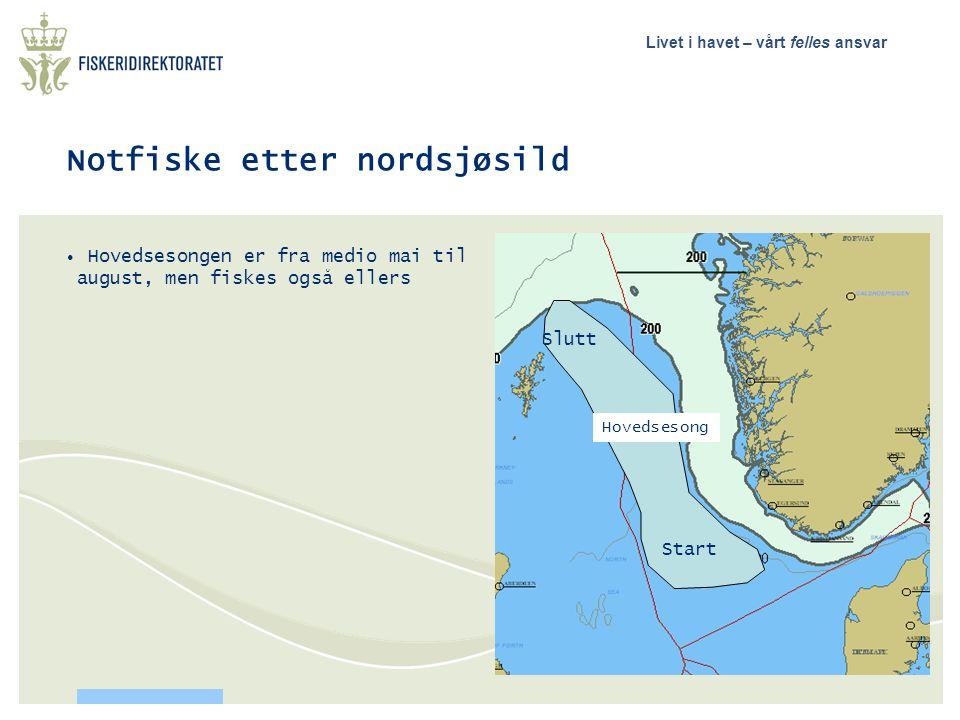Notfiske etter nordsjøsild