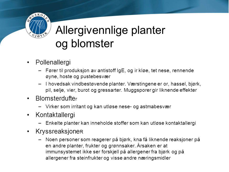 Allergivennlige planter og blomster