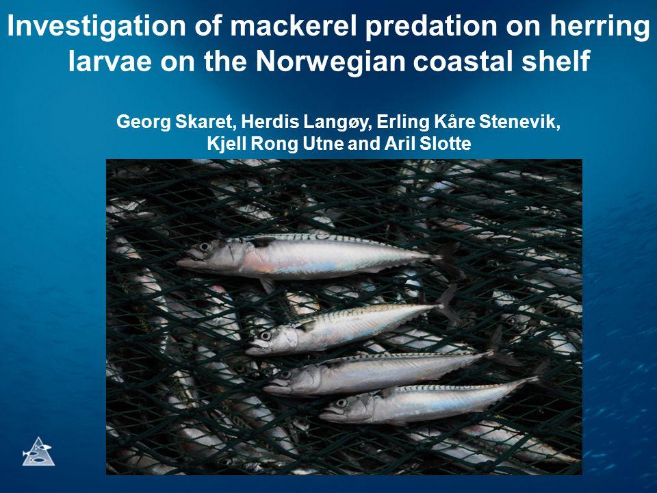 Investigation of mackerel predation on herring larvae on the Norwegian coastal shelf