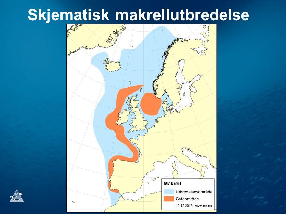 Skjematisk makrellutbredelse