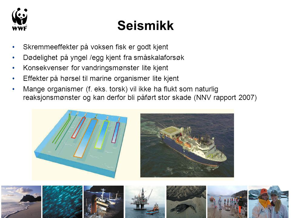 Seismikk Skremmeeffekter på voksen fisk er godt kjent
