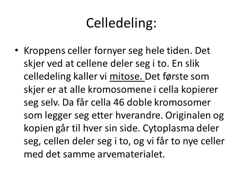 Celledeling: