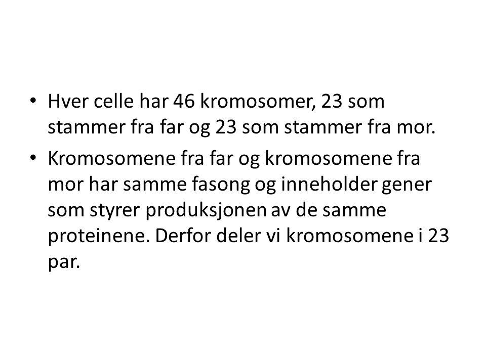Hver celle har 46 kromosomer, 23 som stammer fra far og 23 som stammer fra mor.