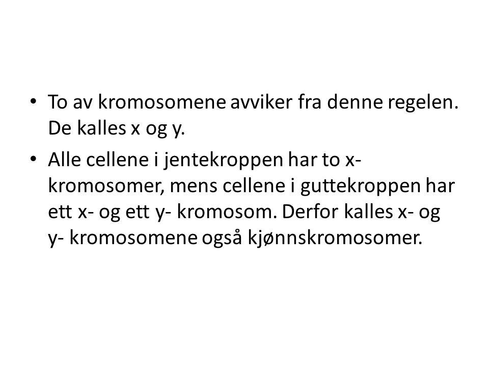 To av kromosomene avviker fra denne regelen. De kalles x og y.