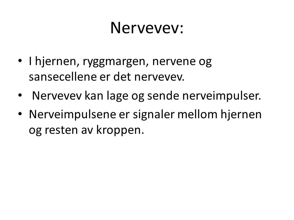 Nervevev: I hjernen, ryggmargen, nervene og sansecellene er det nervevev. Nervevev kan lage og sende nerveimpulser.