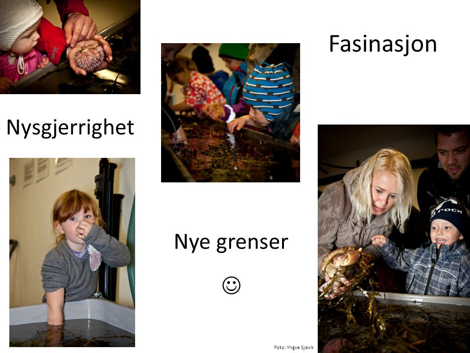 Fasinasjon Nysgjerrighet Nye grenser  Foto: Yngve Sjøvik
